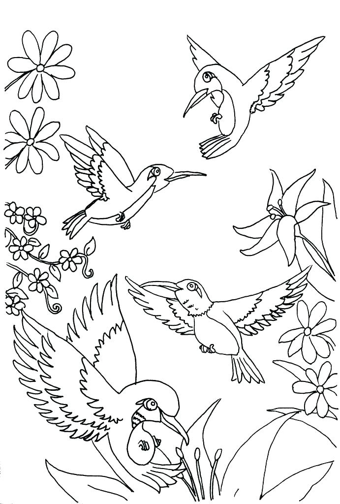691x1024 Coloring Pages Of Hummingbirds Coloring Pages Of Hummingbirds