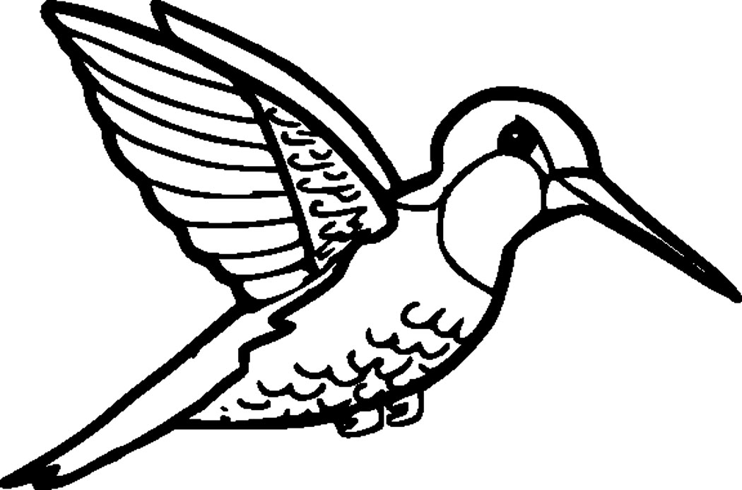 1050x693 Edge Coloring Pages Of Hummingbirds Hummingbird Pictures To Color