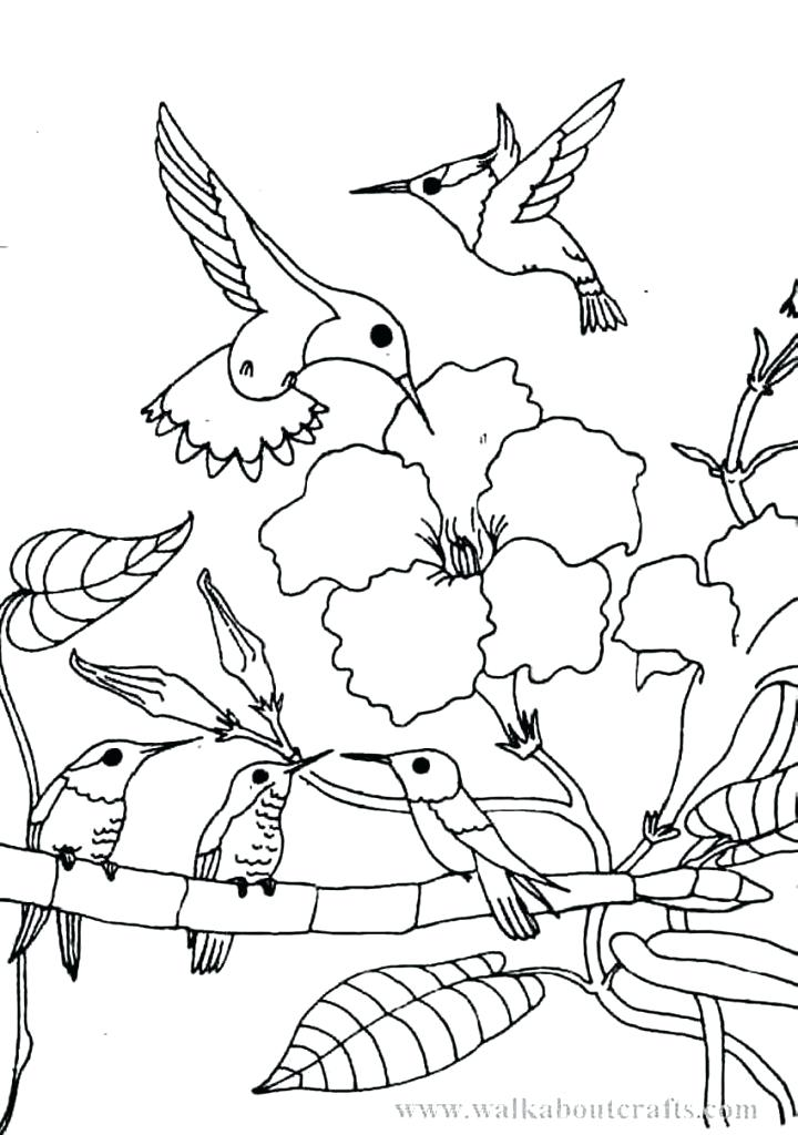 720x1024 Hummingbird Coloring Pages Adult Hummingbird Coloring Pages