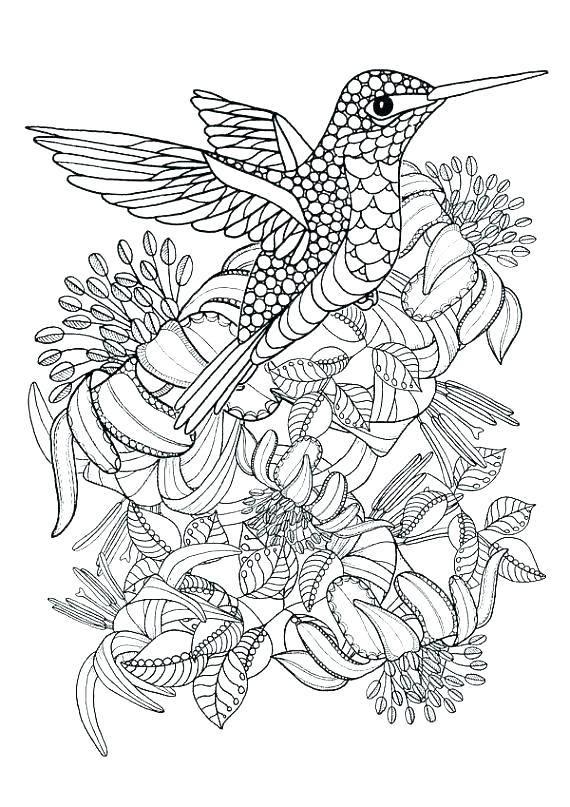 Hummingbird Coloring Pages Printable at GetDrawings.com ...