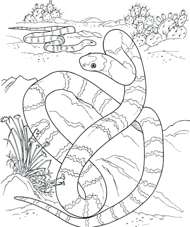 618x738 Evolution Coloring Pages Coloring Page Mega Pages Pictures