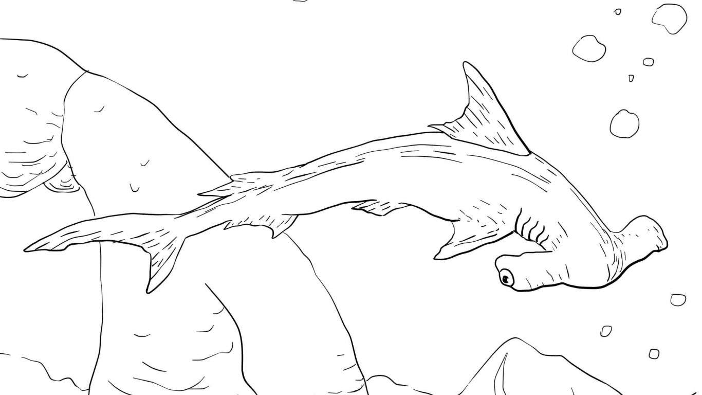 1366x768 Nice Lemon Shark Coloring Page Embellishment