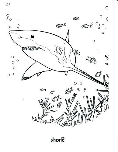 388x500 Good Great White Shark Coloring Pages With Additional Coloring