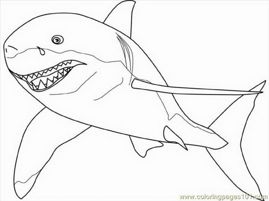 940x704 Great White Sharks Coloring Pages