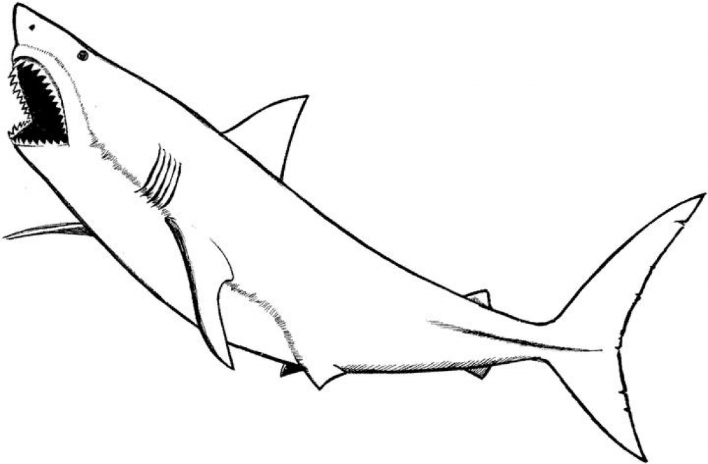 1024x672 Nonsensical Shark Coloring Pages Coloring Pages Of Sharks