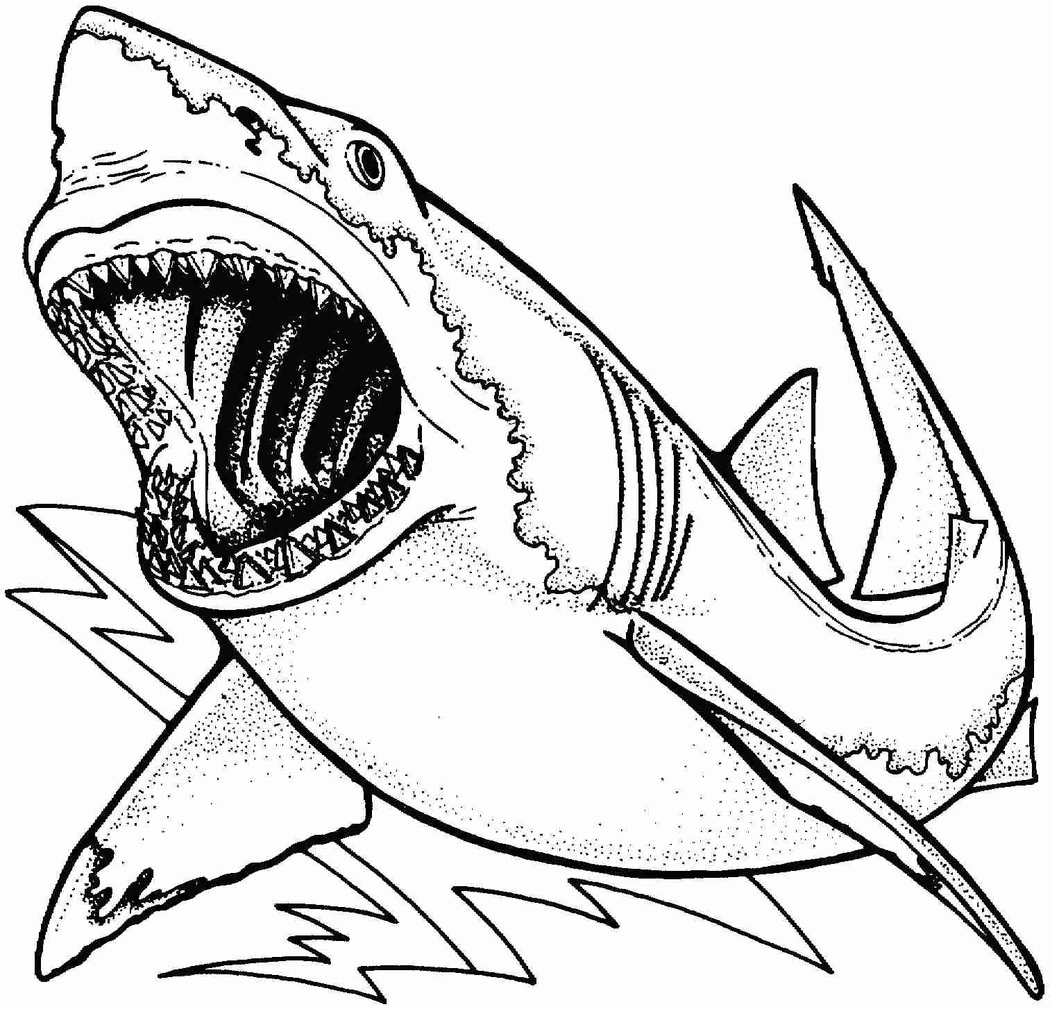 1513x1454 Shark Drawing Coloring Page Within Megalodon Pages Itgod Me