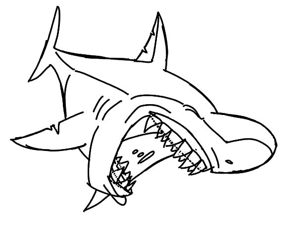 600x456 Bull Shark Jaws Coloring Pages Best Place To Color