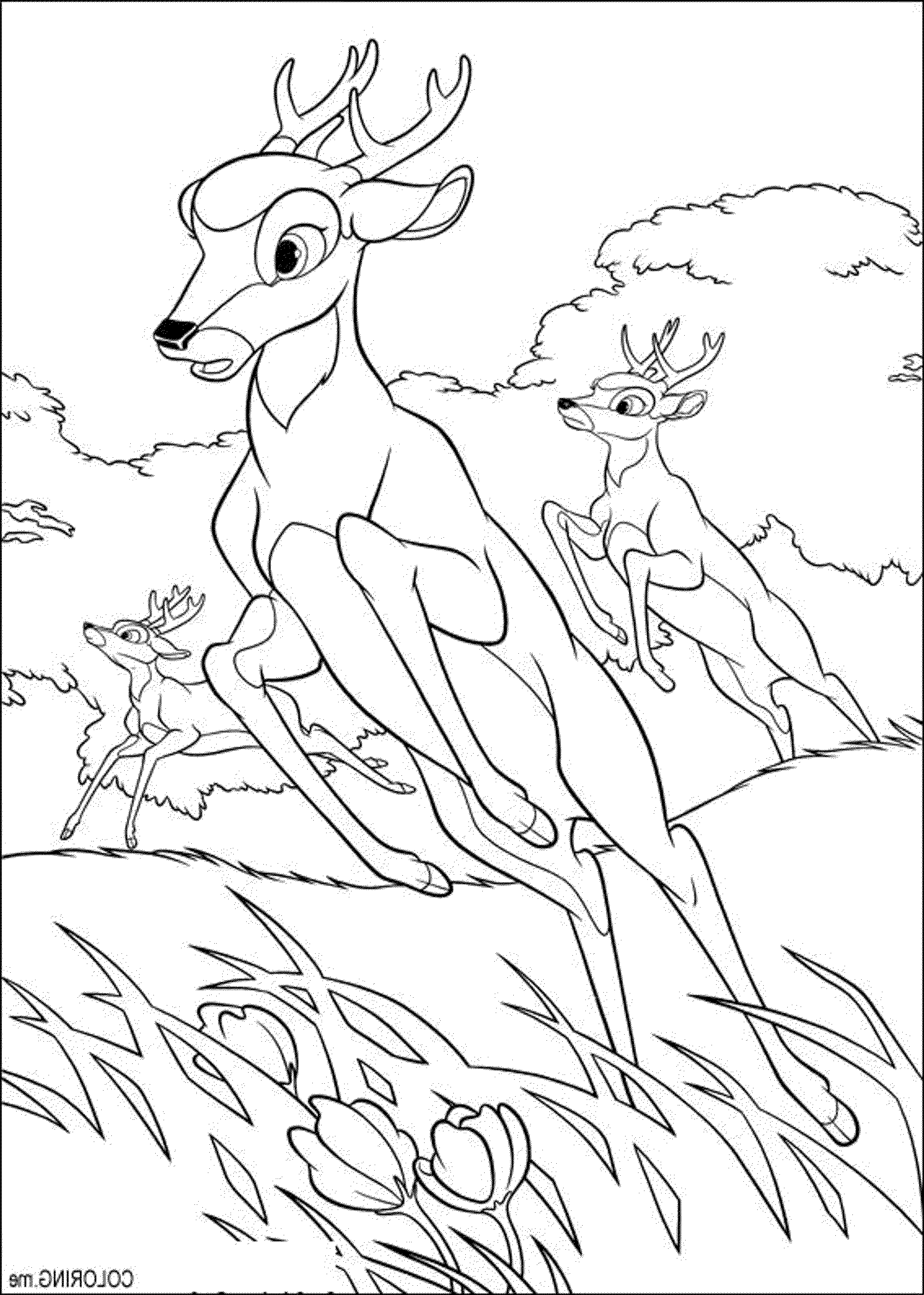 2000x2801 Deer Hunting Coloring Pages