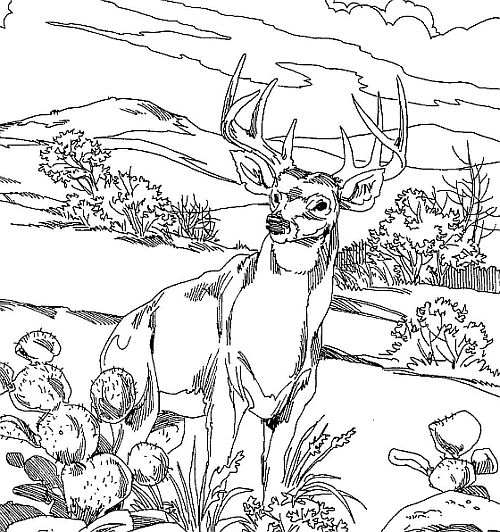500x532 Deer Hunter Coloring Pages
