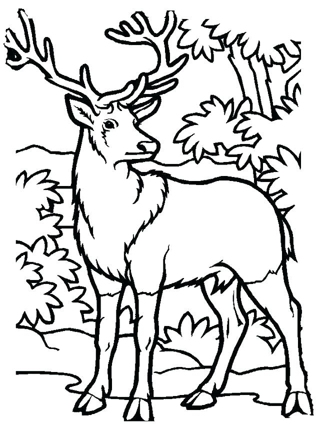 650x866 Deer Hunter Coloring Pages Deer Hunting Coloring Pages Deer Color