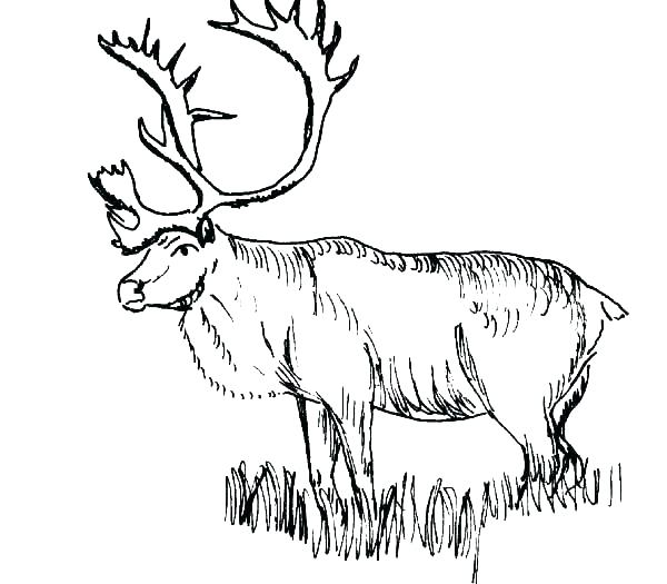 600x525 Hunting Coloring Pages Elk Coloring Pages Here Are Elk Coloring
