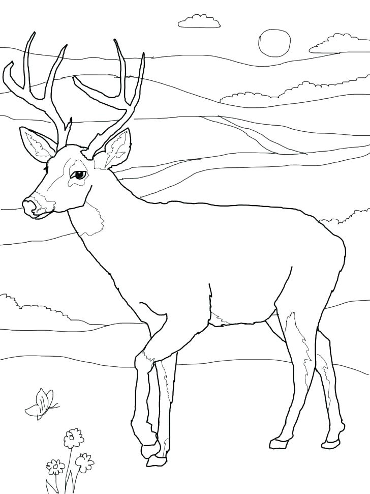 728x971 Hunting Coloring Pages Free Deer Hunting Coloring Pages Hunting
