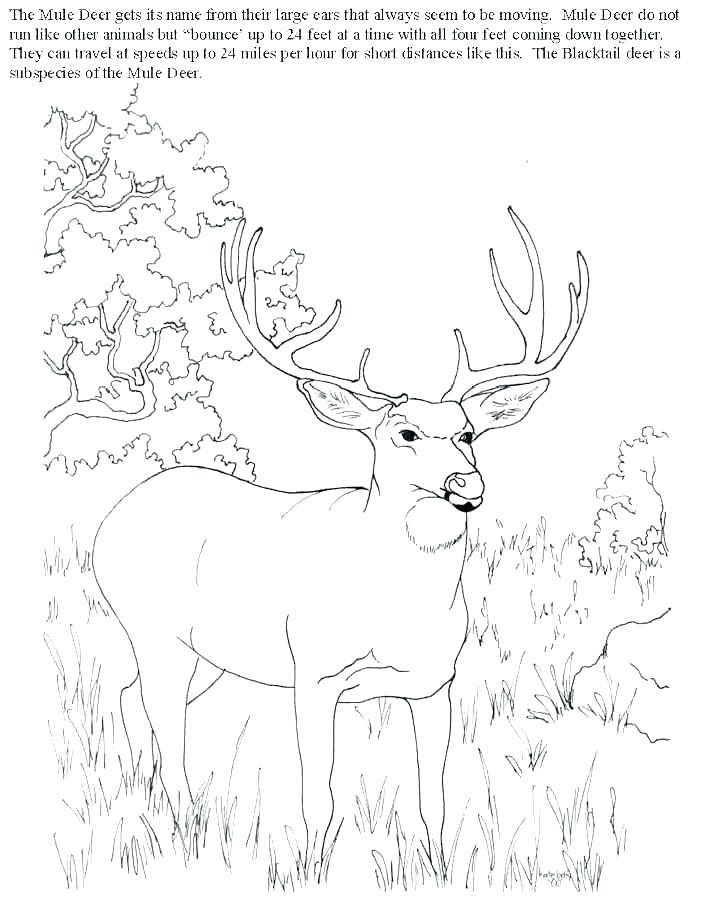 704x899 Hunting Dog Coloring Sheets Kids Coloring Hunting Coloring Sheets