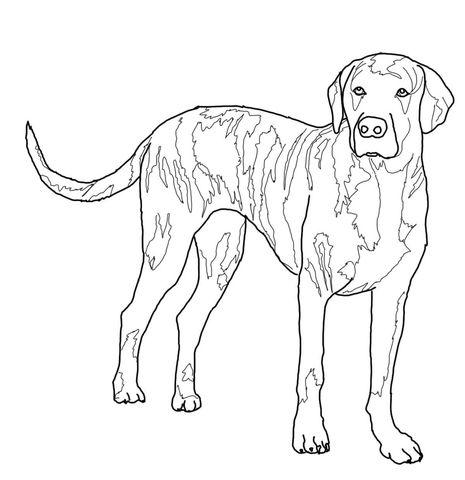 465x480 Plott Hound Coloring Page Dog Art Plott Hound