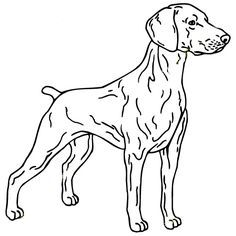 236x236 Realistic Dog Coloring Pages Wallpapers Projects To Try