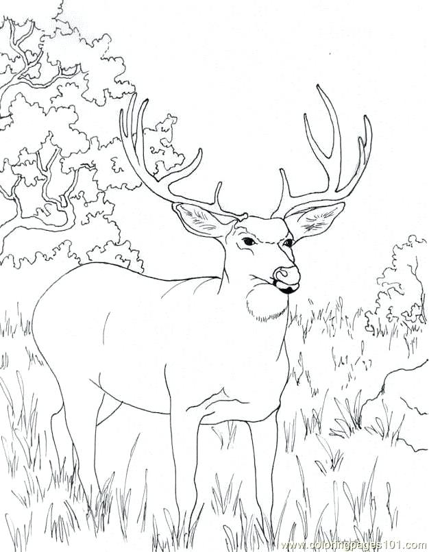 626x806 Deer Hunting Coloring Pages Free Transasia