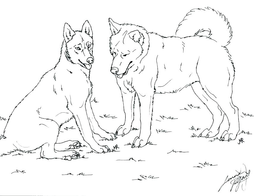854x658 Free Dog Coloring Pages Husky Dog Coloring Pages Dog Coloring