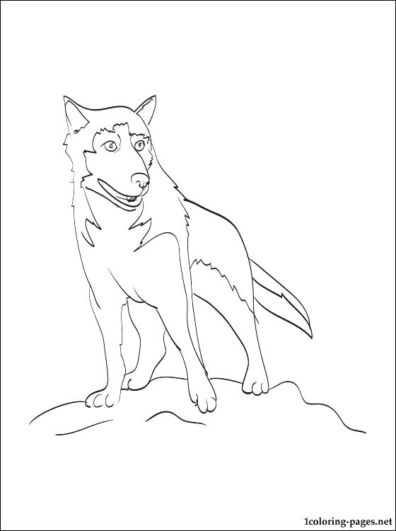560x750 Siberian Husky Coloring Pages Husky Coloring Pictures Husky