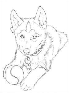 Husky Coloring Pages Printable at GetDrawings.com | Free ...