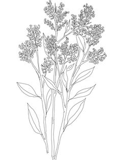 236x314 Hyacinthus Orientalis Or Common Garden Hyacinth Coloring Page