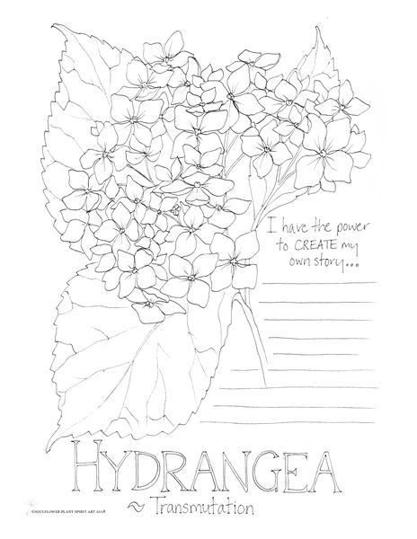 464x600 Hydrangea