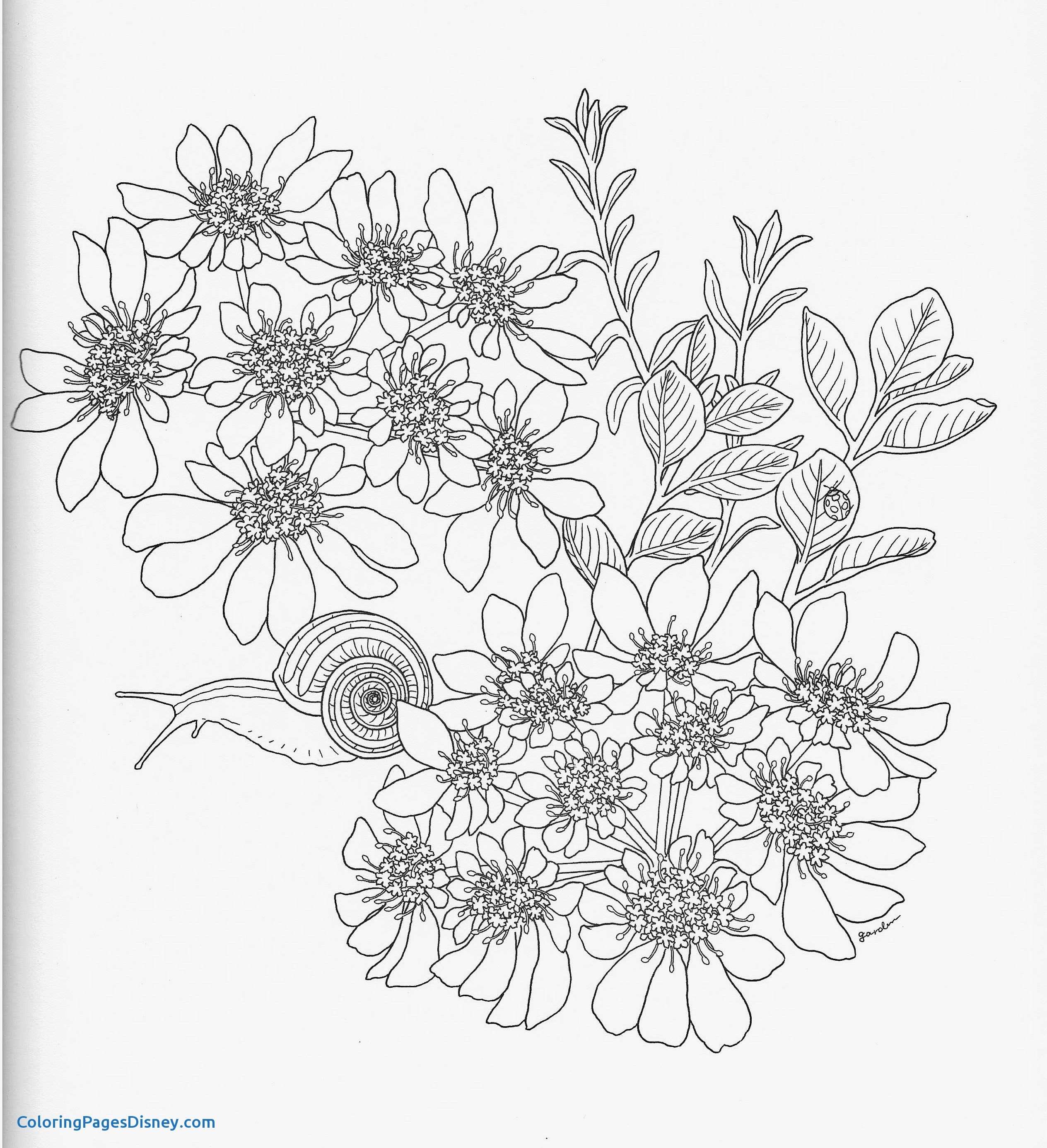 2528x2771 Hydrangea Coloring Pages Unique Harmony Nature Adult Coloring Book