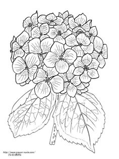 236x314 Hydrangea Peonies Coloring Pages Hydrangea, Embroidery