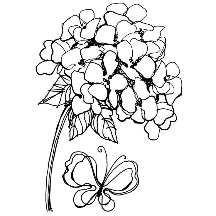 736x736 New Printable Hydrangea Coloring Templates Kate Coloring