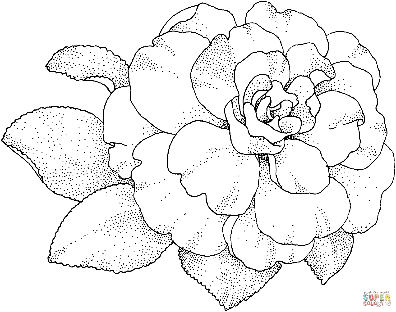 1670x1317 Best Of Camellias Coloring Page Gallery Printable Coloring Sheet