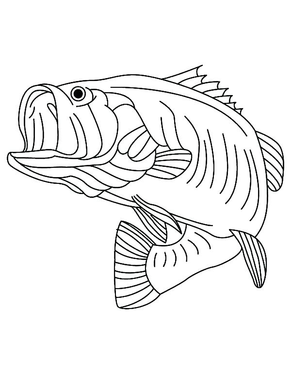 600x771 Fishing Coloring Pages Sea Predator Striped Bass Fish Coloring