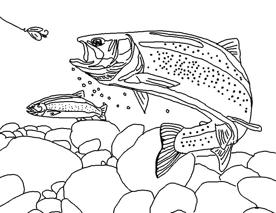 900x695 Fishing Coloring Pages Trout Coloring Book Free Online Printable