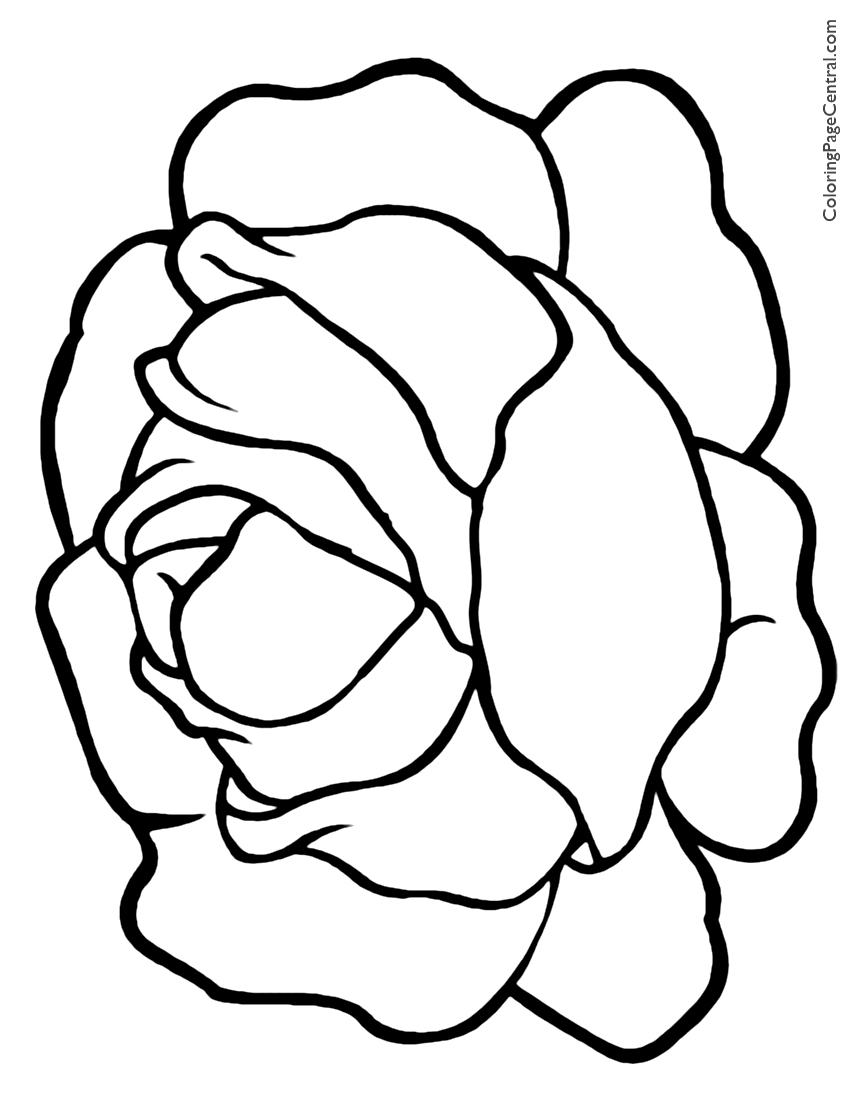 850x1100 Lettuce Coloring Page Coloring Page Central