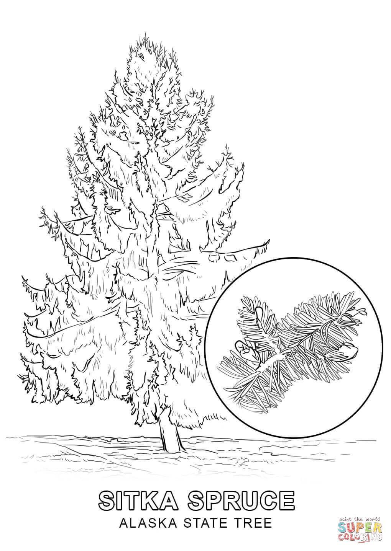 1020x1440 Inspiring Alaska State Tree Coloring Page Printable Pic For Idaho