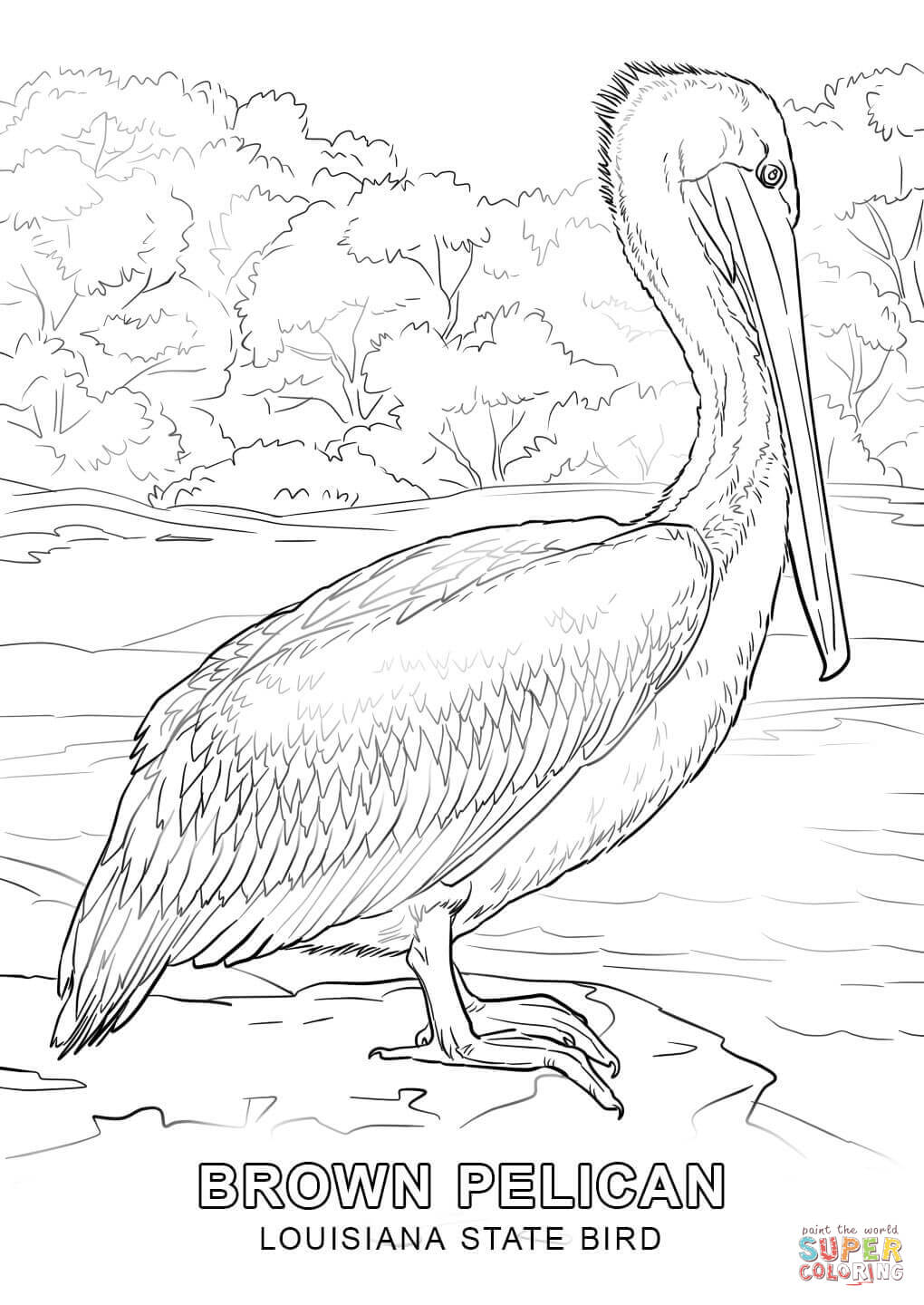 1020x1440 Obsession Idaho State Bird Coloring Page Louis