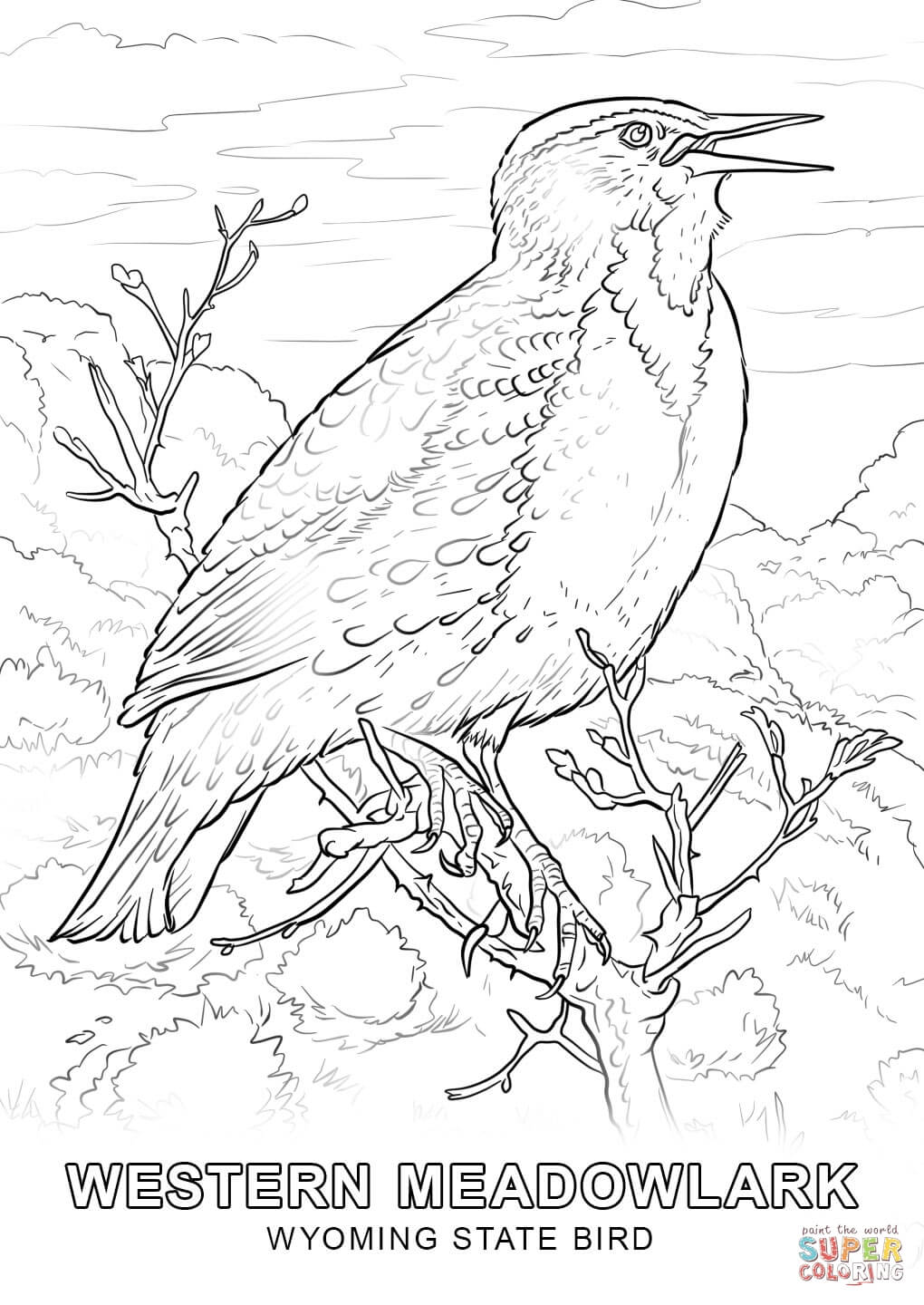 1020x1440 Powerful Idaho State Bird Coloring Page Wyomin