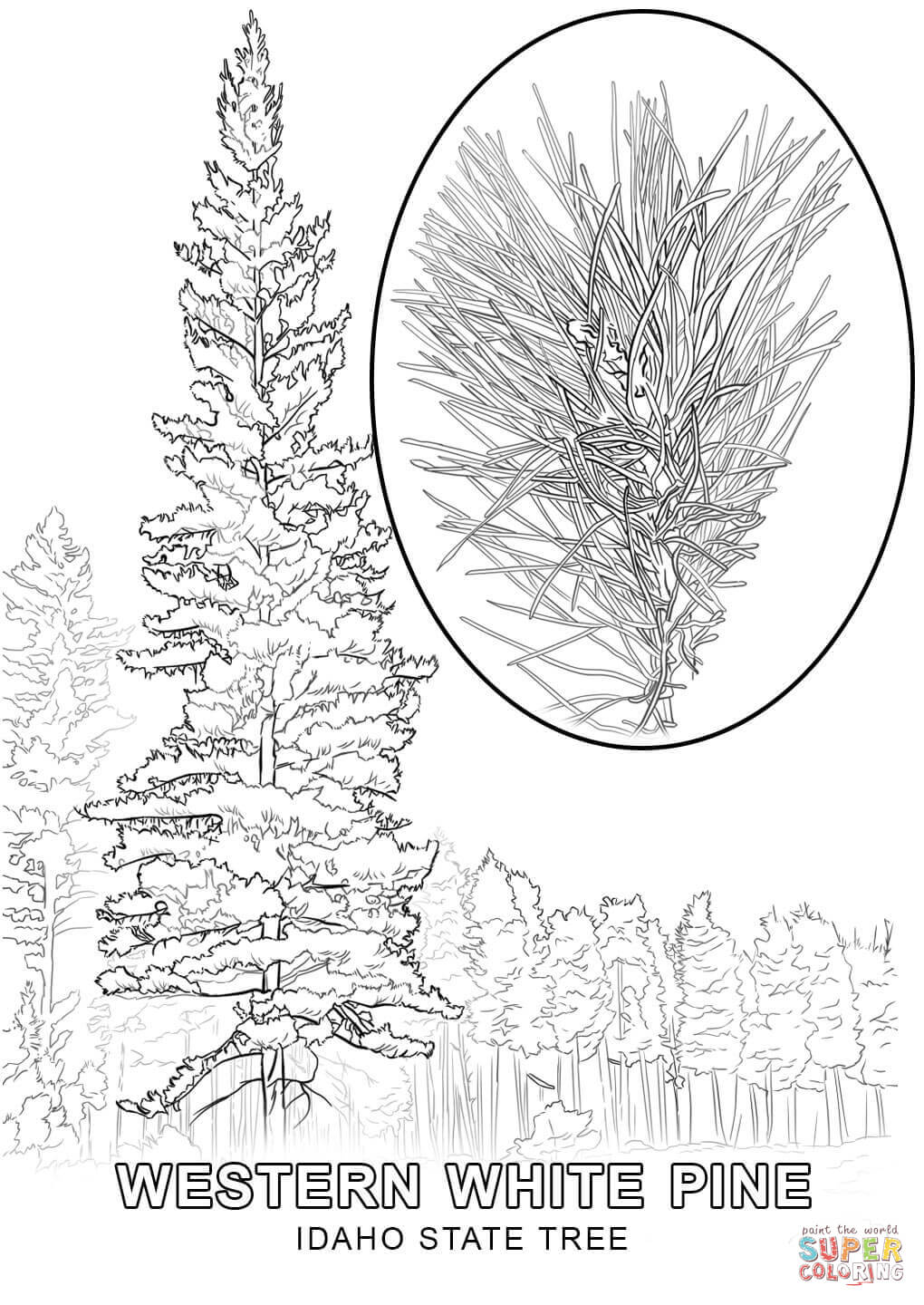 1020x1440 Top Idaho State Symbols Coloring Pages Tree Pa