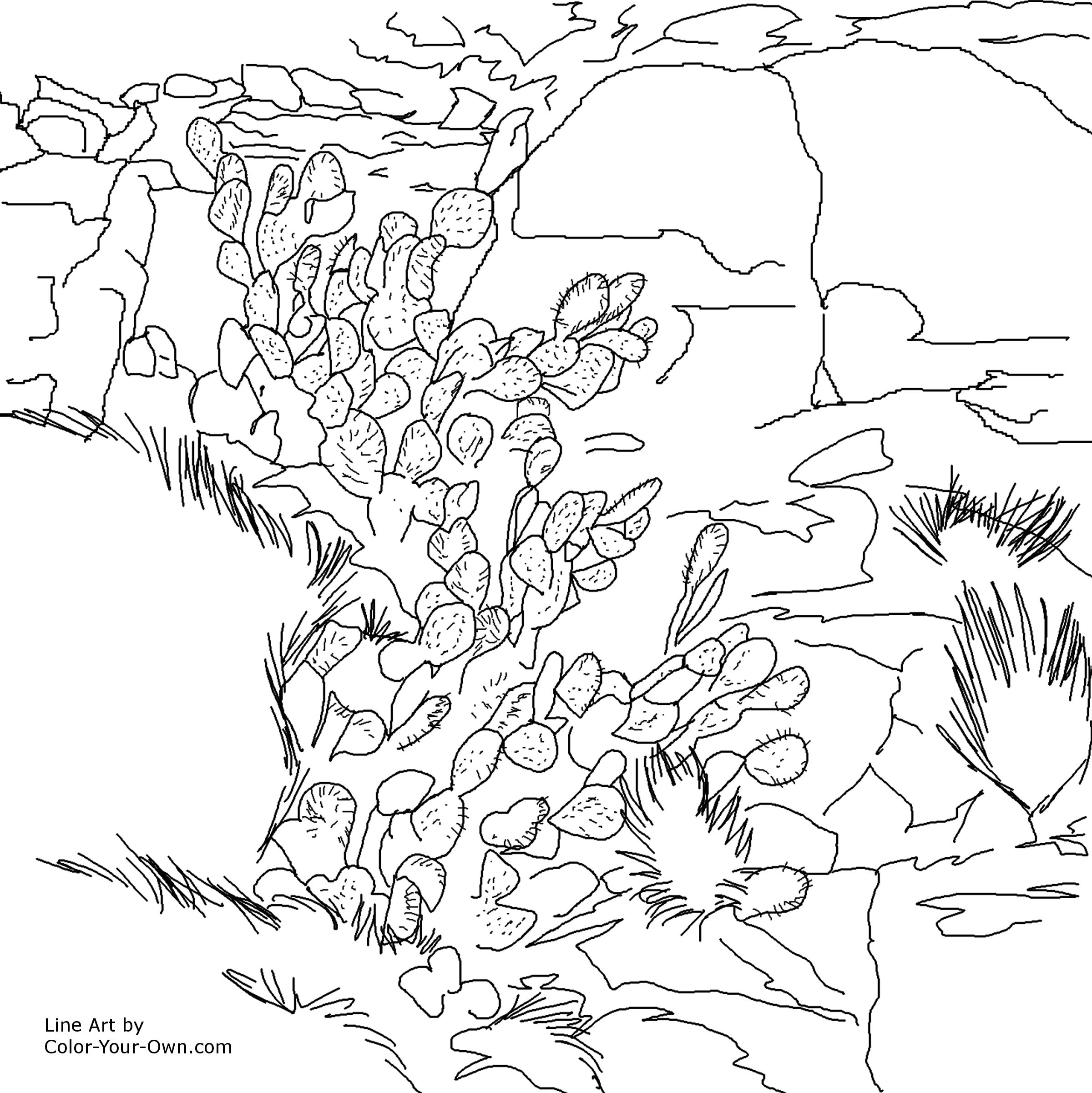 2400x2402 Prickly Pear Cactus And Rocks Southwestern Art Coloring Page