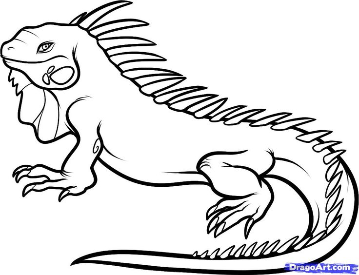 Iguana Coloring Page At Getdrawings Free Download