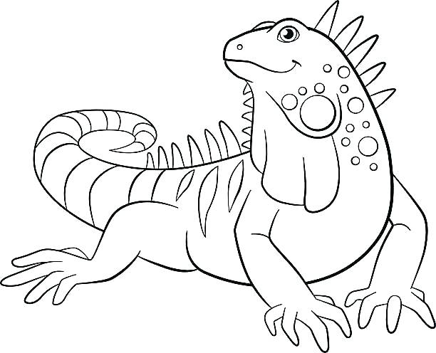612x496 Green Iguana Coloring Pages Kids Coloring Iguana Coloring Pages