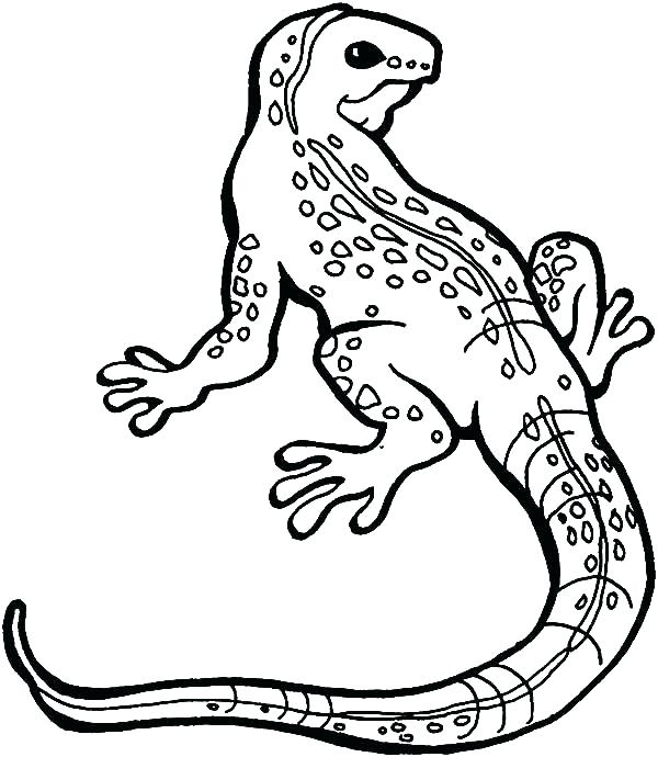 600x690 Iguana Coloring Pages Coloring Iguana Coloring Pages Lizard Great