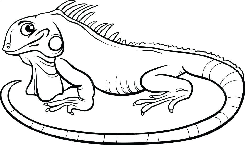 1024x609 Iguana Coloring Pages Iguana Coloring Page Good Iguana Coloring
