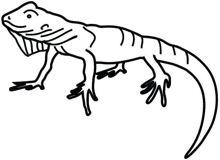 708x515 Colorear Iguana Coloring Page Iguana Animals Printable Coloring