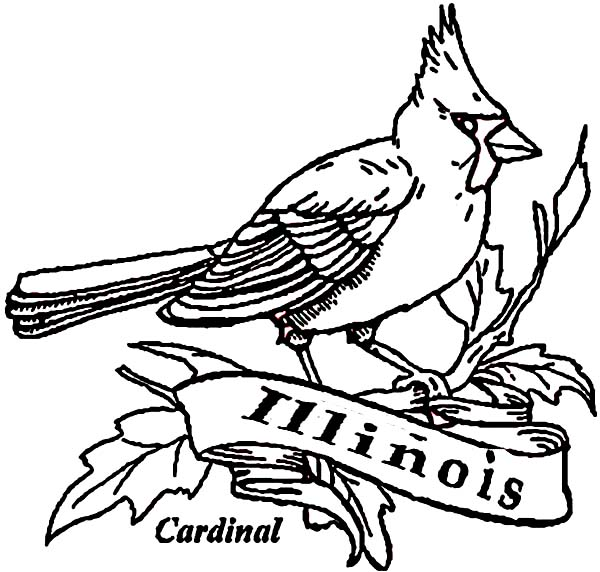 600x572 Cardinal Bird Of Illinois Coloring Page Coloring Sun