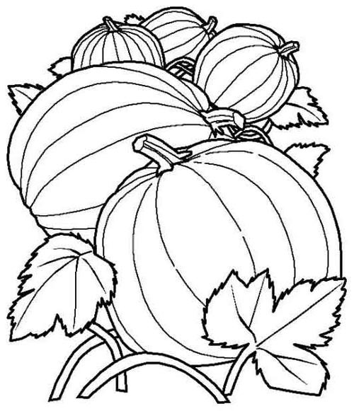 Images Of Fall Coloring Pages