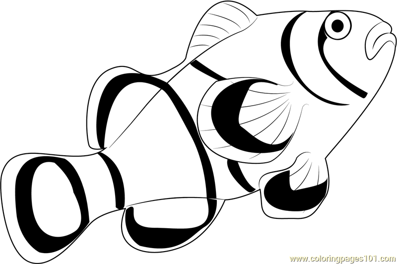 800x532 Clown Fish Coloring Page