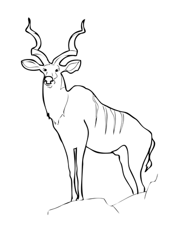 360x480 Greater Kudu Animal Coloring Page