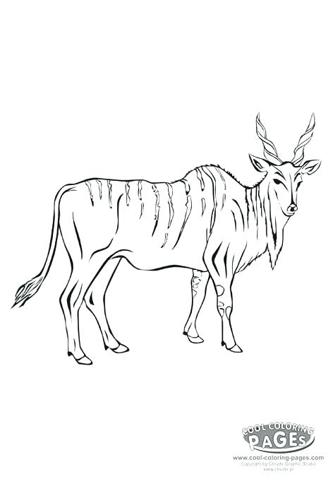 472x678 Impala Animal Coloring Pages Antelope Animal Coloring Pages