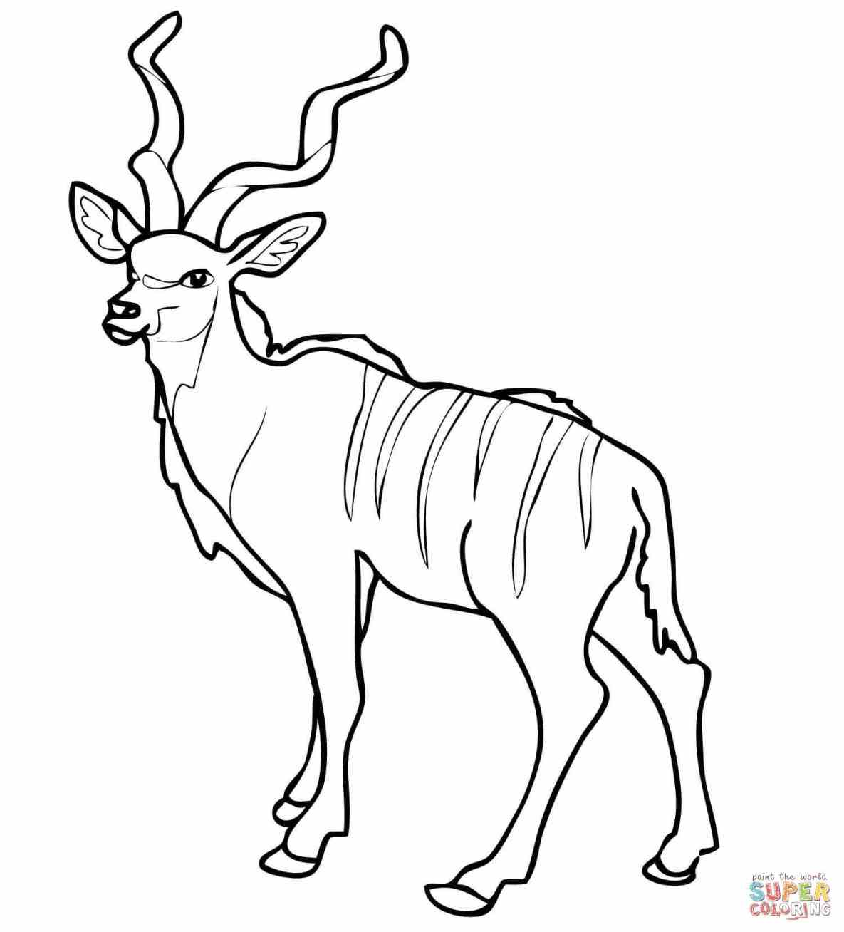1185x1308 Impala Coloring Page Web Coloring Pages