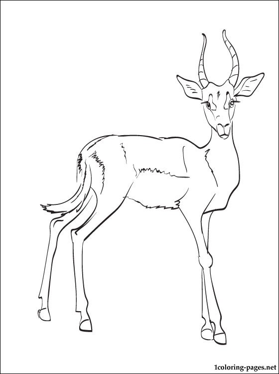 560x750 Impala Coloring Page Coloring Pages