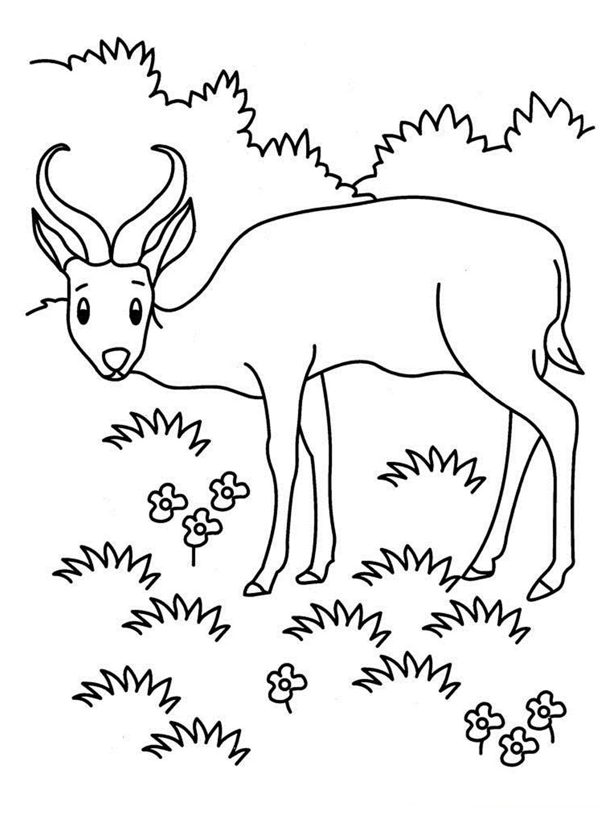 1200x1600 Antelope Coloring Pages